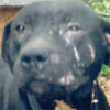 Help Stop Dogfighting