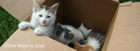 Other Ways to Support the Michigan Humane Society