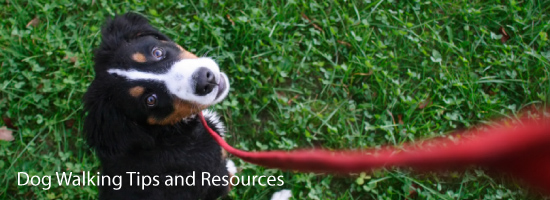 Dog Walking Tips and Resources