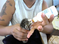 MHS Rescue Team member Angie feeds a kitten