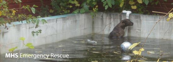 MHS Emergency Animal Rescue