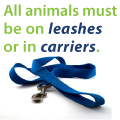 All animals must be on leashes or in carriers.