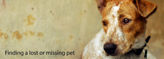 Lost or missing pet: What to do
