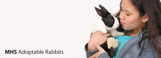 Adoptable Rabbits