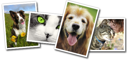 MHS Online Pet Photo Contest