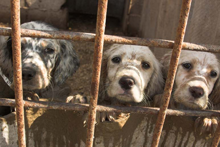 Help fight puppy mills