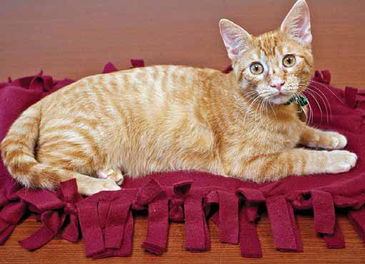 Make A Fleece Blanket For Homeless Cats And Kittens Michigan Humane
