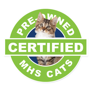 Certified Pre-Owned Cats