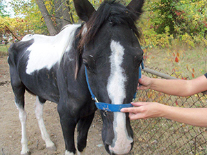 Two Beautiful Horses Need Your Help Today