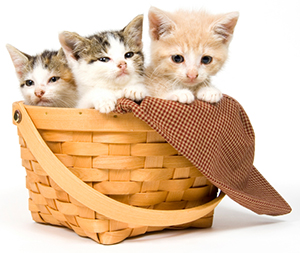 how to find homes for kittens