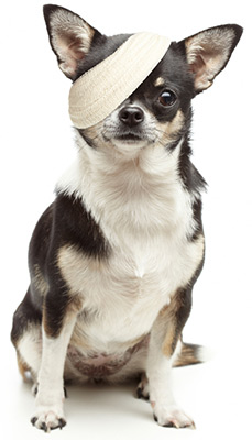 Help sick and injured animals.