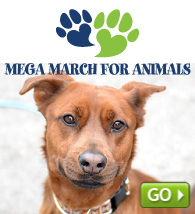 March for Animals