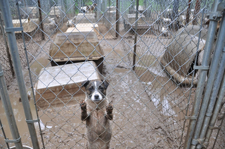 Puppy Mill Raid/Photo credit: ASPCA®