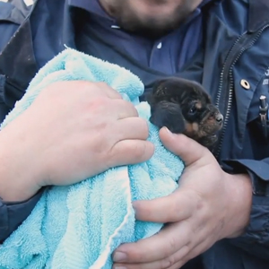 Puppy wrapped in warm blanket after surviving more than 24 h