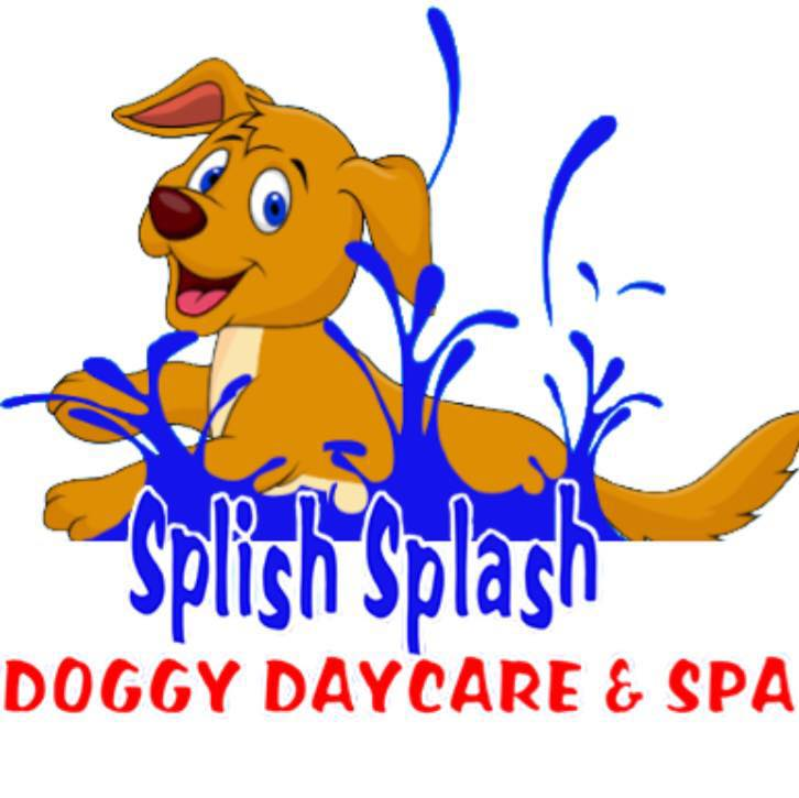 splish splash doggy daycare and spa