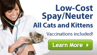 Low-cost feline spay/neuter