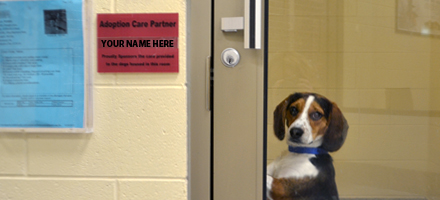 Adoption Care Partner