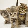 kittens-100.jpg