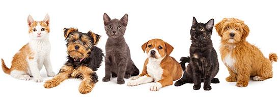 $25 Pet Adoptions!