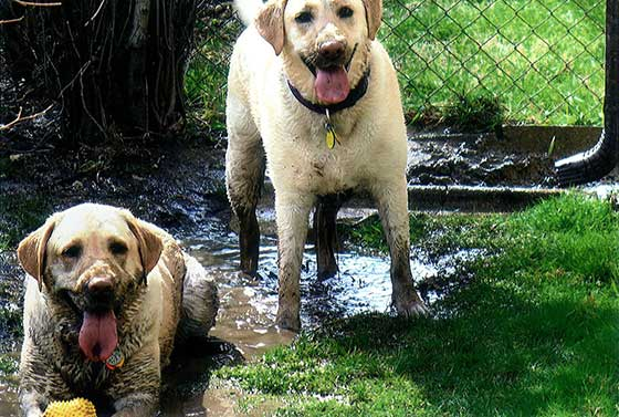 How to Clean Muddy Dog Paws