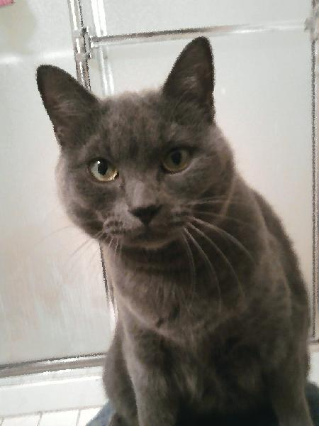 Michigan Humane Society Adopt A Cat