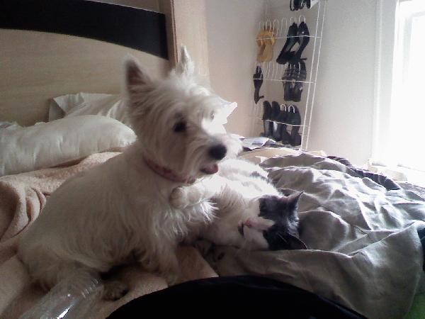 Little Dog Lost Michigan Humane Society