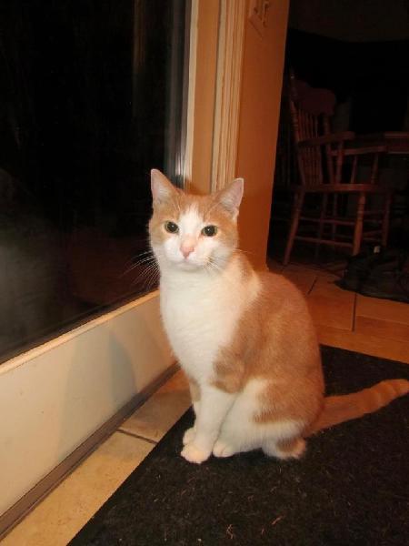 Cat Rescue West Michigan