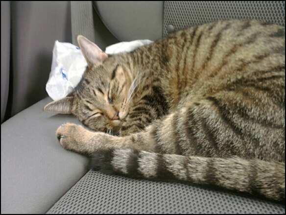 elderly cat litter box