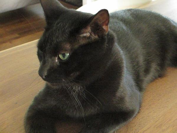 Missing Black White Cat